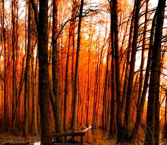 Kutalanjoki auringonnousun aikaan 2020 Kuva: Esko Hentilä